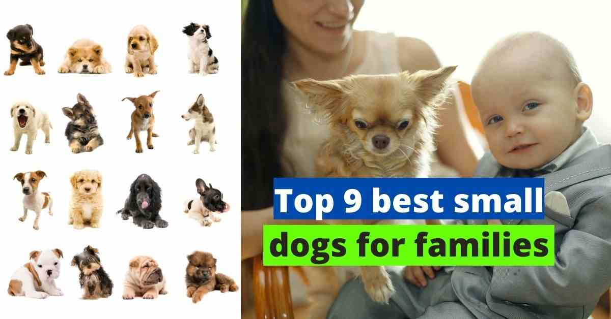 Top 9 Best Small Dogs For Families Dogs Services